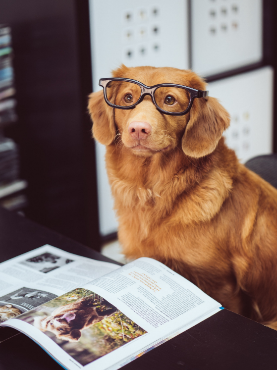 Studious dog | Bright Bite: How to Edit Photos Online for Your Website | Brighter Vision | Therapist Websites & Marketing Solutions